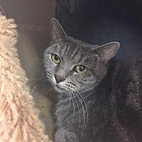 Adopt A Pet :: Jaclyn - Alpharetta, GA