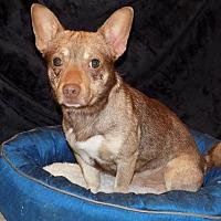 Adopt A Pet :: Waylon - York, SC