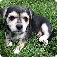Adopt A Pet :: Baxter - Salem, OR