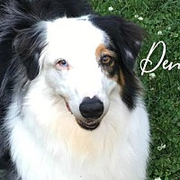Adopt A Pet :: Denali - Joliet, IL