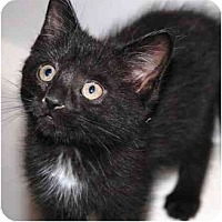 Adopt A Pet :: Penney - Markham, ON