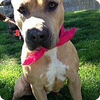 Adopt A Pet :: Honey - Scottsdale, AZ