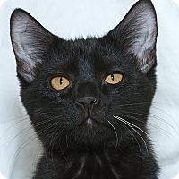 Adopt A Pet :: Upasana V - Sacramento, CA