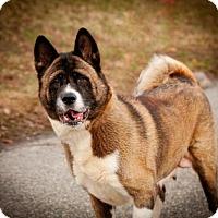 Adopt A Pet :: Princess & Zeke - Toms River, NJ