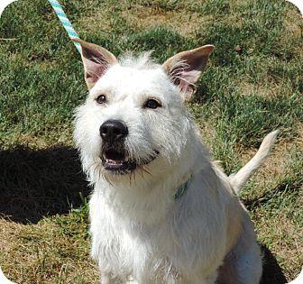 Terrier (Unknown Type, Medium) Mix Dog for adoption in Sioux City, Iowa - LOUIE