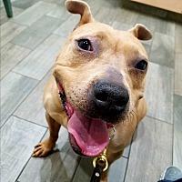 Adopt A Pet :: Lollipop - Troutville, VA