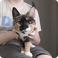 Adopt A Pet :: Rosie - Wilmington, DE