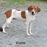 Adopt A Pet :: Floyd - Washington, GA