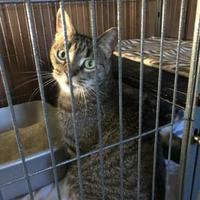 Adopt A Pet :: Tigger - Denver, CO