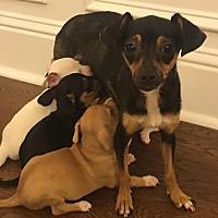 Adopt A Pet :: Ripley - San Francisco, CA