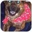 Photo 2 - English Bulldog/Chow Chow Mix Dog for adoption in Inman, South Carolina - Bowser
