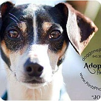 Adopt A Pet :: Josie - Accord, NY