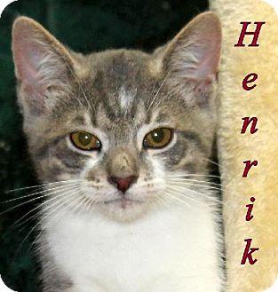 Domestic Shorthair Cat for adoption in Lewisburg, West Virginia - Henrik