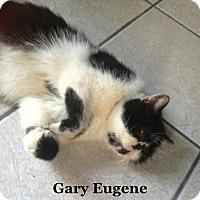 Adopt A Pet :: Gary Eugene - Bentonville, AR