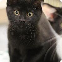 Adopt A Pet :: Mario - Sacramento, CA