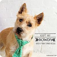 Adopt A Pet :: Rowdy - Omaha, NE