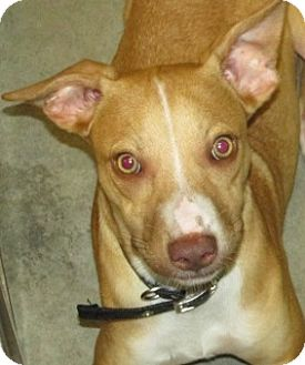 Terrier (Unknown Type, Medium) Mix Dog for adoption in Aiken, South Carolina - LUCCA