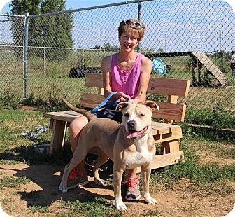 American Bulldog Mix Dog for adoption in Elyria, Ohio - Teagan