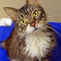 Adopt A Pet :: Paws 160244 - Atlanta, GA
