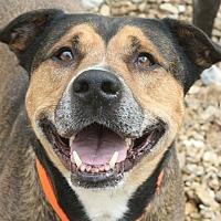 Adopt A Pet :: Spike (SPONSORED) - Springfield, MO