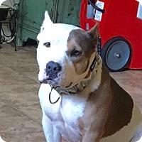 Adopt A Pet :: LONDON - Minnesota, MN