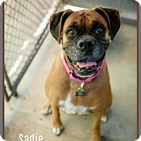 Adopt A Pet :: Sadie - Oceanside, CA