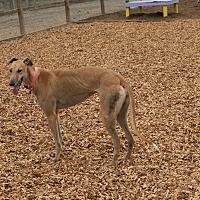 Adopt A Pet :: JUSTY - Santa Rosa, CA