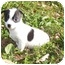 Photo 3 - Chihuahua Mix Puppy for adoption in Oswego, Illinois - Freedom PENDING