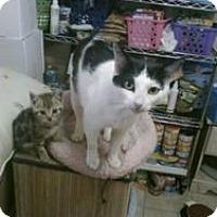 Adopt A Pet :: Marnie - Berkeley Hts, NJ