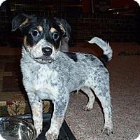 Adopt A Pet :: Dickens - Oak Creek, WI
