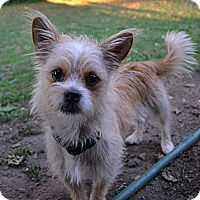 Adopt A Pet :: Spud~Adopted! - Troy, OH