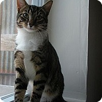 Adopt A Pet :: Joey - Bayonne, NJ