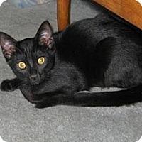 Adopt A Pet :: Scooter - Kirkwood, DE