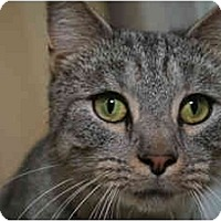 Adopt A Pet :: Cybill - Cincinnati, OH