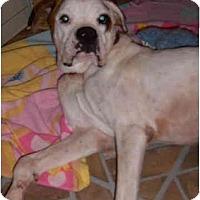 Adopt A Pet :: Wally - Pembroke Pines, FL