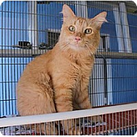 Adopt A Pet :: Logan - Newport Beach, CA