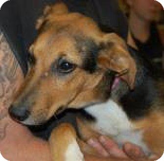 Hound (Unknown Type) Mix Puppy for adoption in Brooklyn, New York - Kacie