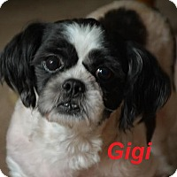 Adopt A Pet :: Gigi - Adopted Sept 2015 - Huntsville, ON
