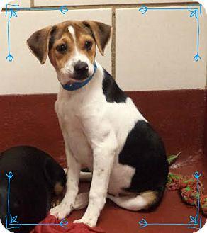 Beagle Mix Puppy for adoption in Marietta, Georgia - FITCH