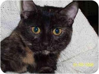 Domestic Shorthair Cat for adoption in Alden, Iowa - Carla