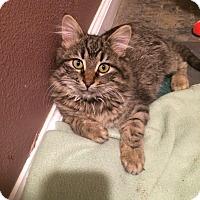 Adopt A Pet :: Aurora - Weatherford, TX