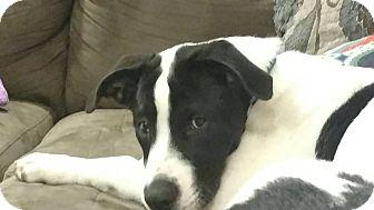 Hound (Unknown Type) Mix Puppy for adoption in Milton, New York - Wayne