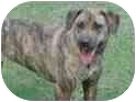 Plott Hound/Labrador Retriever Mix Dog for adoption in Claymont, Delaware - Molly