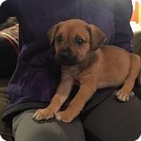 Adopt A Pet :: Pack - Marlton, NJ