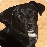 Dachshund Mix Dog for adoption in Allentown, Pennsylvania - Suzie