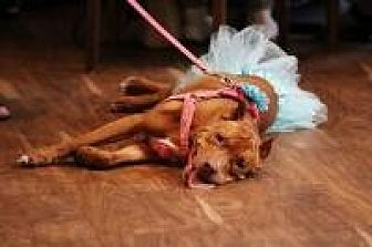 Pit Bull Terrier Mix Dog for adoption in Crown Point, Indiana - Kally