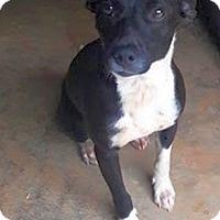 Adopt A Pet :: Sparky - Knoxville, TN