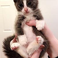 Adopt A Pet :: Thumper - Anaheim Hills, CA