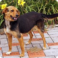 Adopt A Pet :: Susie - Maynardville, TN