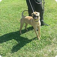 Adopt A Pet :: Kenny Chesney - Jersey City, NJ